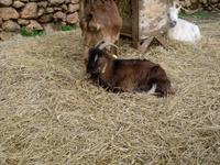 Tiere auf La Granja (3)