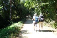 Auf dem Jakobsweg von Arzua nach O Pino (10)