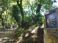 Auf dem Jakobsweg von Arzua nach O Pino (16)