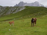 Wanderung im Nationalpark Picos de Europa von Fuente De bis Espinama in Kantabrien (36)