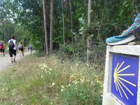 Wanderung auf dem Jakobsweg von Salceda nach Lavacolla (28)