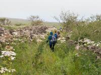 Wanderung auf den Hochweiden von El Hierro