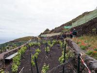 Weinanbau auf El Hierro