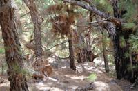Wanderung in der Caldera de Taburiente – La Palma