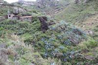 Wanderung von Afur nach Taganana – Teneriffa