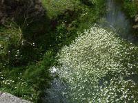 Blühende Seen in der Sierra de Grazalema