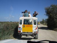 Camargue: Foto-Safari