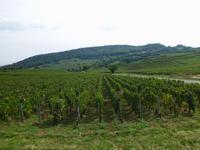 im Weingebiet Beaujolais