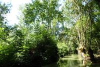 Kahnfahrt im Marais de Poitevin (6)