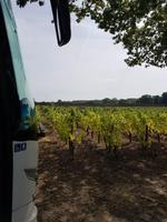 Muscadet - Coing (2)