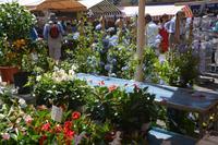 auf dem Markt Cours Saleya