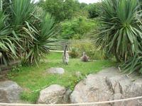 Parc Paysager et Zoologique de Champrépus