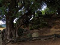 Steinbruch in Filitosa