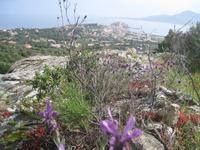 Blick auf Calvi