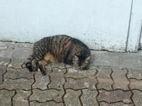 078. Katze beim Wingut Le Pere Auguste