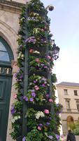 Blumenschmuck in Orléans