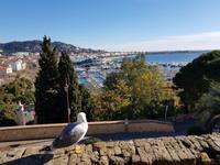 Cannes Blick auf den Hafen