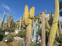 Jardin Exotique Eze