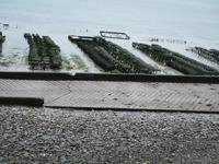 Cancale, Austernbänke