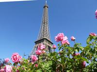 Eiffelturm (8)