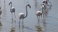 Flamingos II Vogelpark Pont de Gau