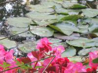 Seerosenteich von Claude Monet