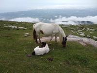 Auf dem Berg La Rhune