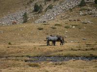 Schöne Pferde in den Bergen