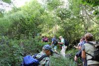 Wanderung durch einen gut bewachsenen Wald im Nationalpark von Andorra