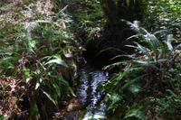 04 Im Wald von Brocéliande