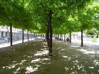 Wie bei Renoir. Licht und Schatten auf dem Place de Vosges