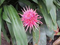 Nationaler Botanischer Garten von Wales