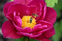 0676 Botanischer Garten von Wales