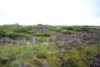 Nationalpark Cairngorm