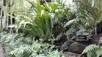 Botanischer Garten Glasgow 20180812 182656