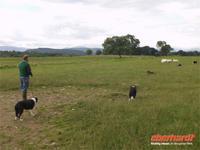 Schäfer Ross  zeigt seine Arbeit auf der Farm An Leault