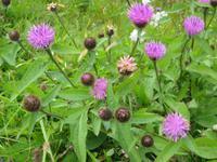 Pflanzenwelt am Glen Coe