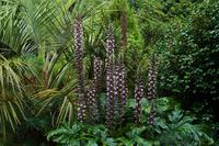 235 Cornwall, Trebah Garden