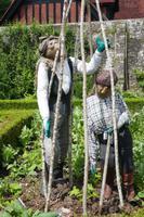 Gemüsegarten Arundel Castle