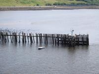 Fähreinfahrt auf den Tyne