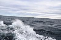 275 Überfahrt zu den Orkneys, Pentland Firth