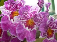 Eric Young Orchideenausstellung