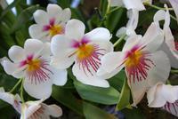 In der Eric Young Orchideenausstellung