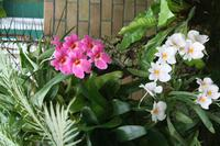 In der Eric Young Orchid Foundation