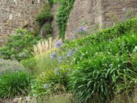 Mont Orgueil Castle - Blumen