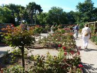Howard Davis Park - Rosengarten
