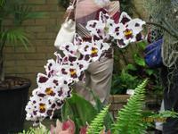 Blütenpracht in der Orchid Foundation