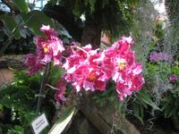 Orchidee in der Eric Young Fundation