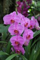 Eric Young Orchideen Ausstellung