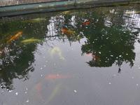 Fischteich Privatgarten Mr. Miles